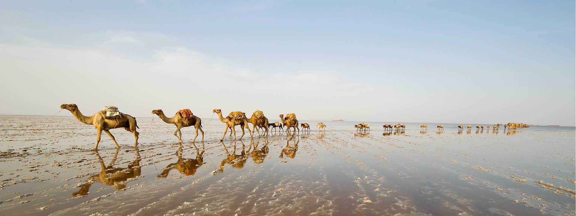 Camel train at Lac Abbe -desert adventures in Djibouti